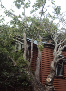 Storm Damage Tree Removal Archives All Access Stump Grinding
