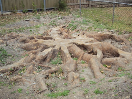 Large tree stump taking up valuable lawn space in a small backyard