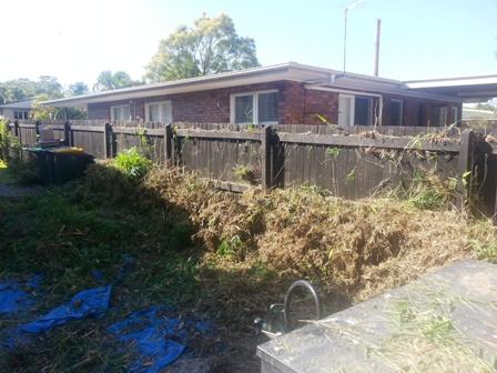 Bamboo removal Salisbury