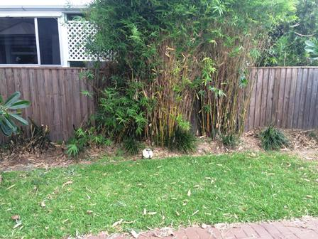 Bamboo Removal Wooloowin All Access Stump Grindingall