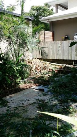 Stump Grinding Tarragindi Bamboo Removal All Access