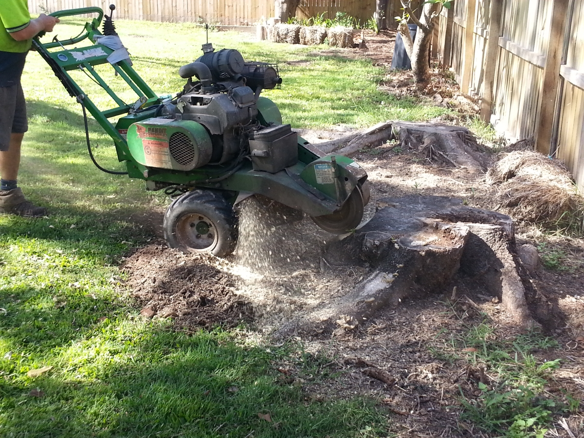 Stump Grinding Virginia