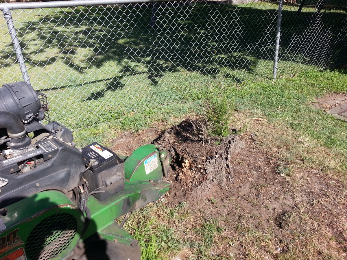 Stump grinding Geebung