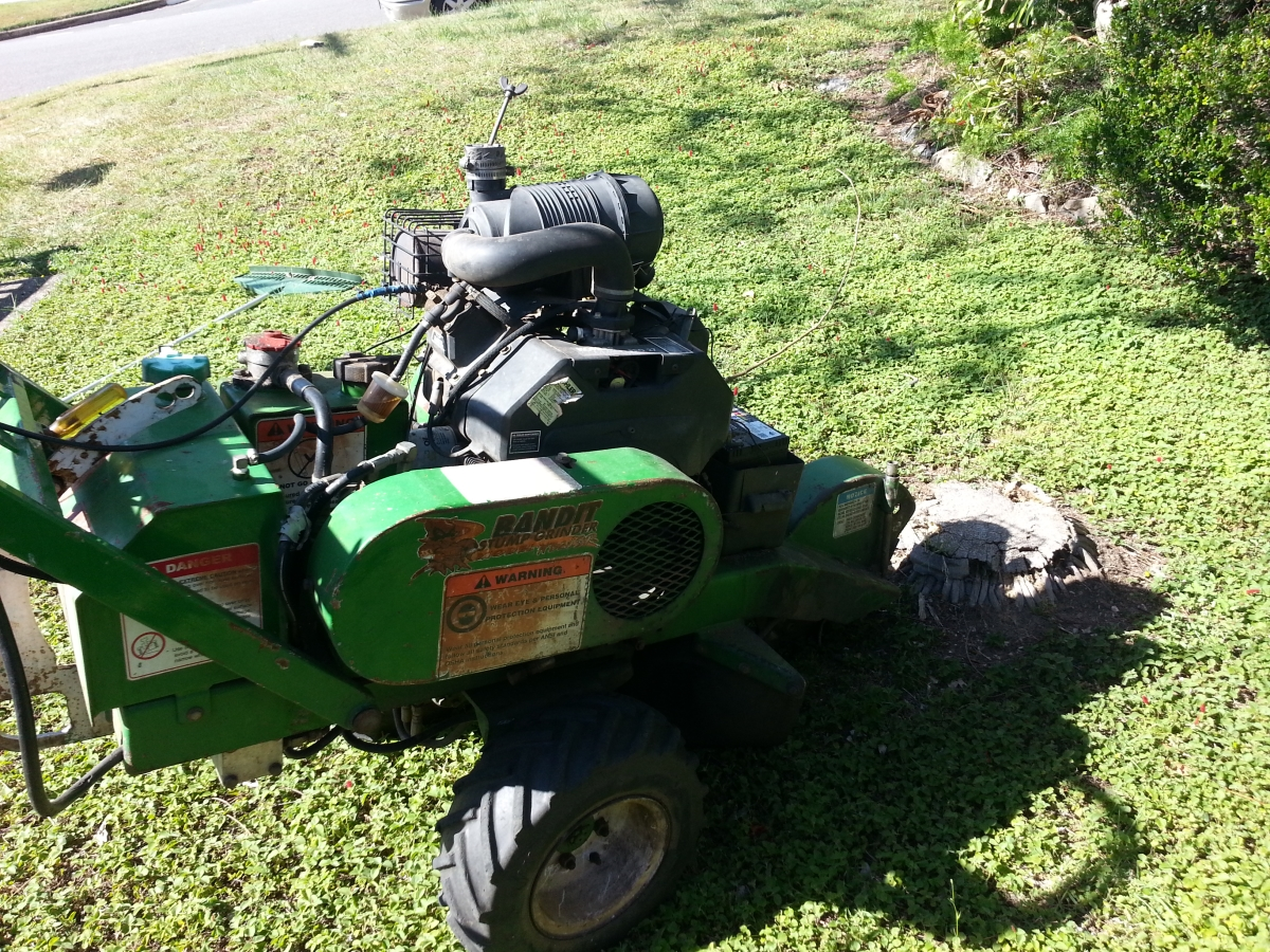 Palm Stump Grinding Geebung