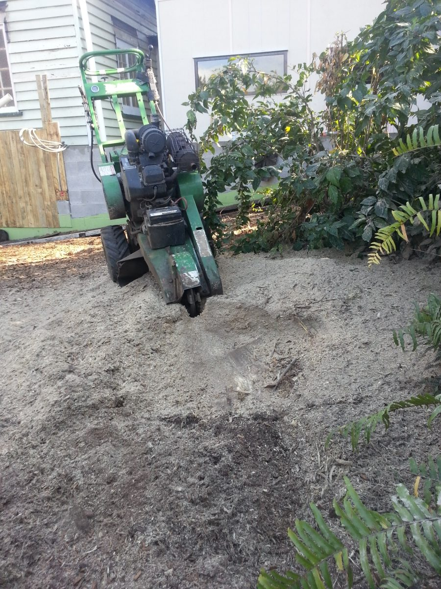 Stump Grinding Kelvin Grove All Access Stump Grinding