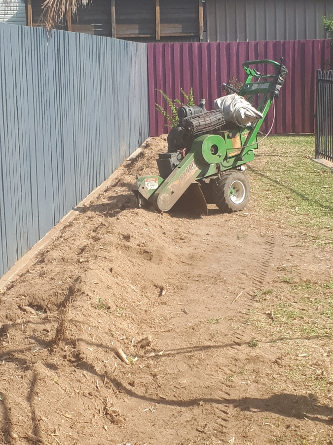 Stump grinding Albany Creek Bamboo removal