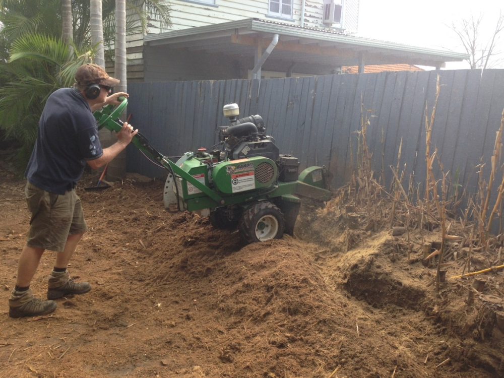 Bamboo Removal Gallery All Access Stump Grinding
