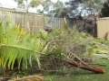 Trees and shrubs felled and ready for removal from site