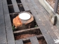 The stump in question. The plate was used to aid in a price estimate.