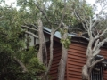 Recent storm damage(Cyclone Oswald 2013)