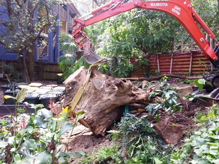Brisbane Stump removal by All Access Stump Grinding