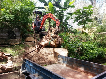 tree stump removal brisbane