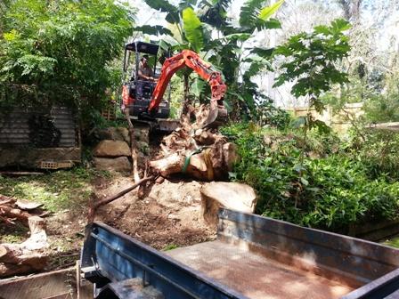 tree stump removal brisbane