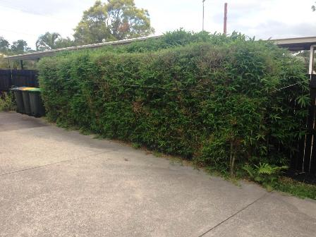 Hedges Removed Brisbane