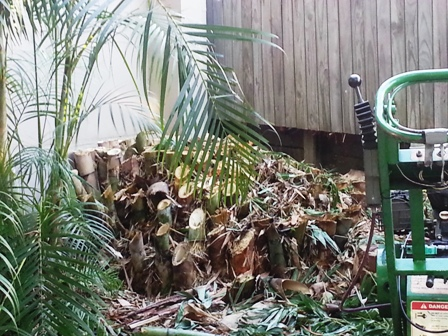 Brisbane Bamboo Removal by All Access Stump Grinding