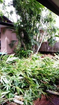 Plant Removal Brisbane