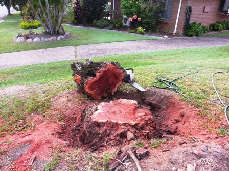 Stump Grinding or Removal
