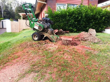 Stump Grinding Keperra All Access Stump Grindingall