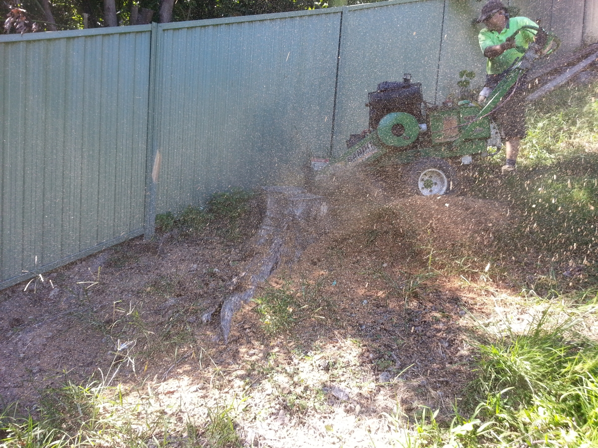 Optimized 20170410 102515 All Access Stump Grinding