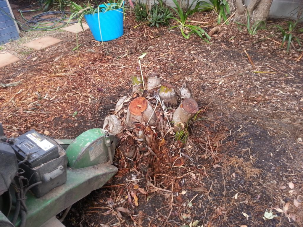 Mitchelton Stump grinding