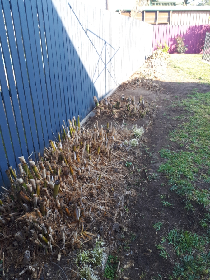 Brisbane Bamboo Removal