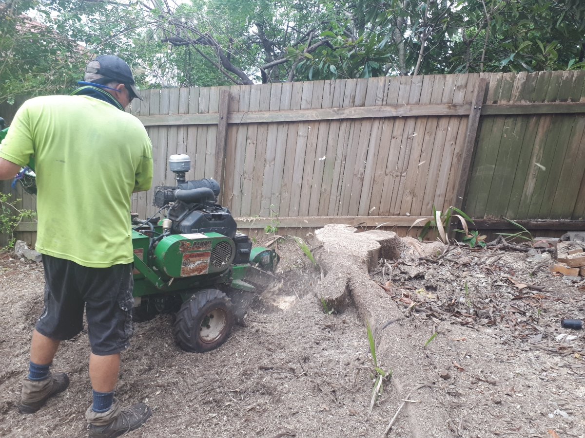 Stump Grinding Holland Park