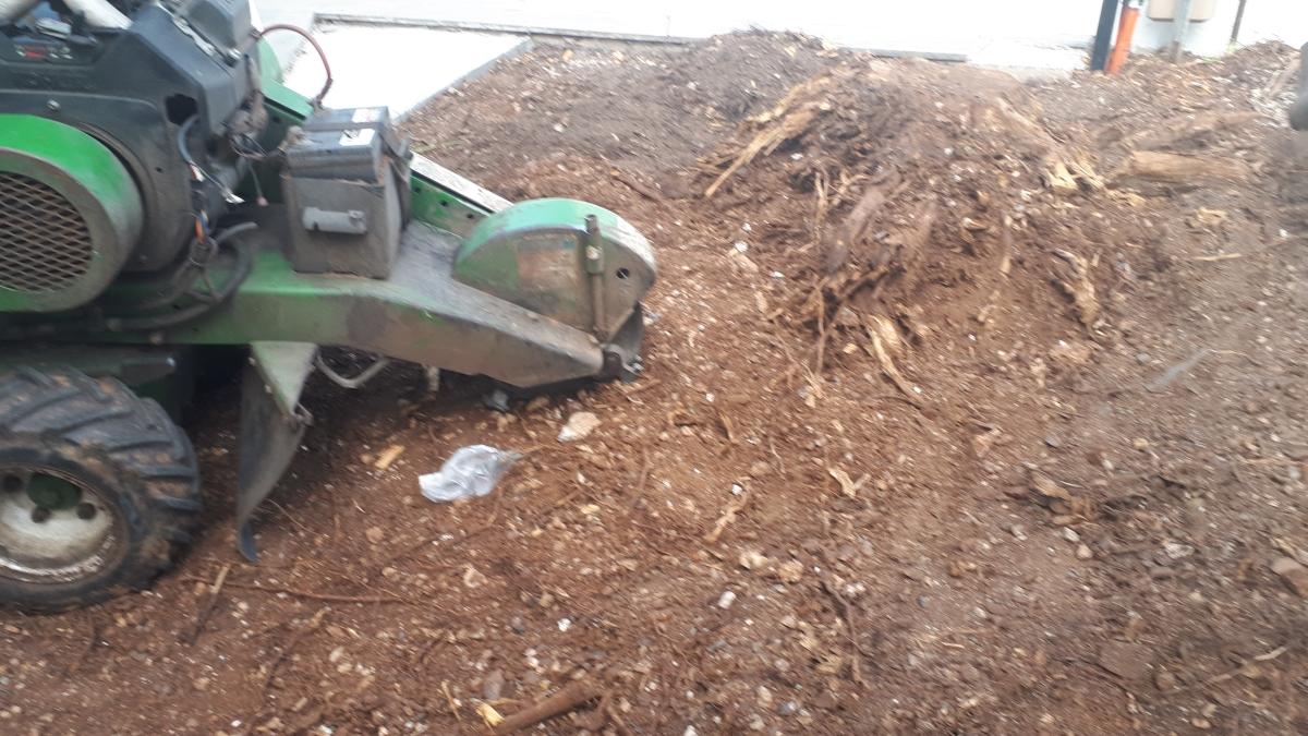 Stump grinding Ascot