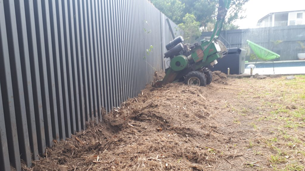 Bamboo Removal Albany Creek