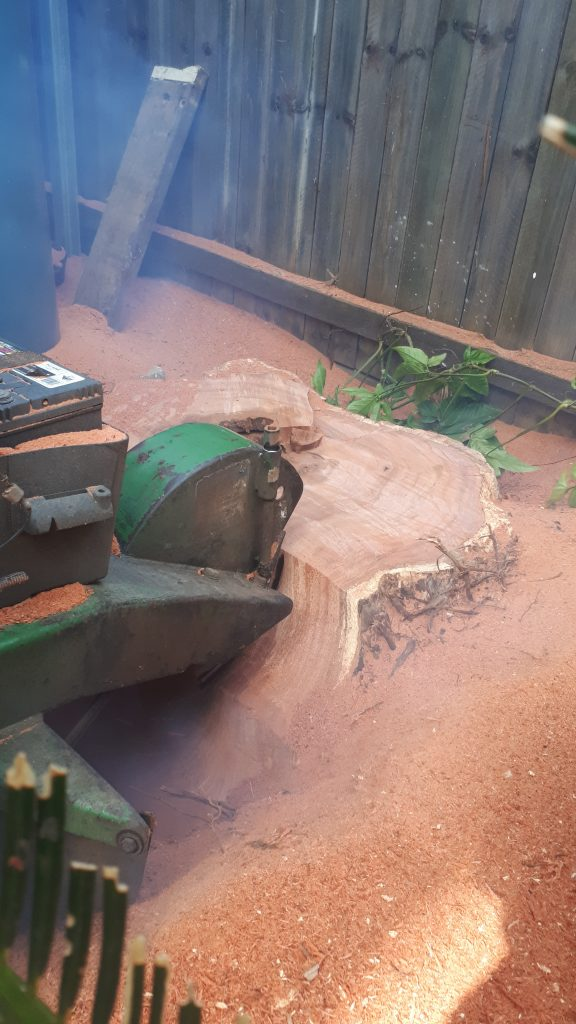 Stump Grinding/Removal Shorncliffe