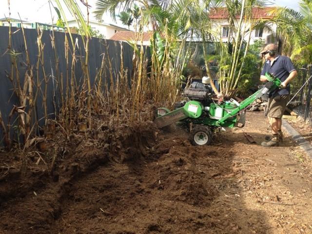 Bamboo removal Tarragindi