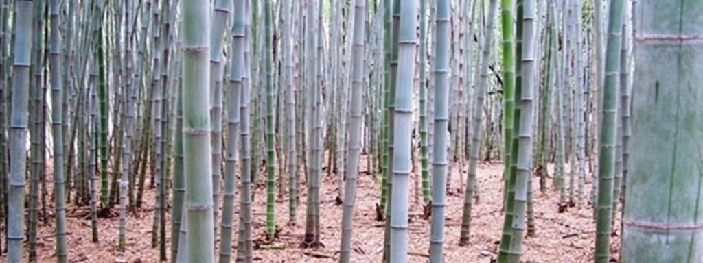 bamboo removal service near me