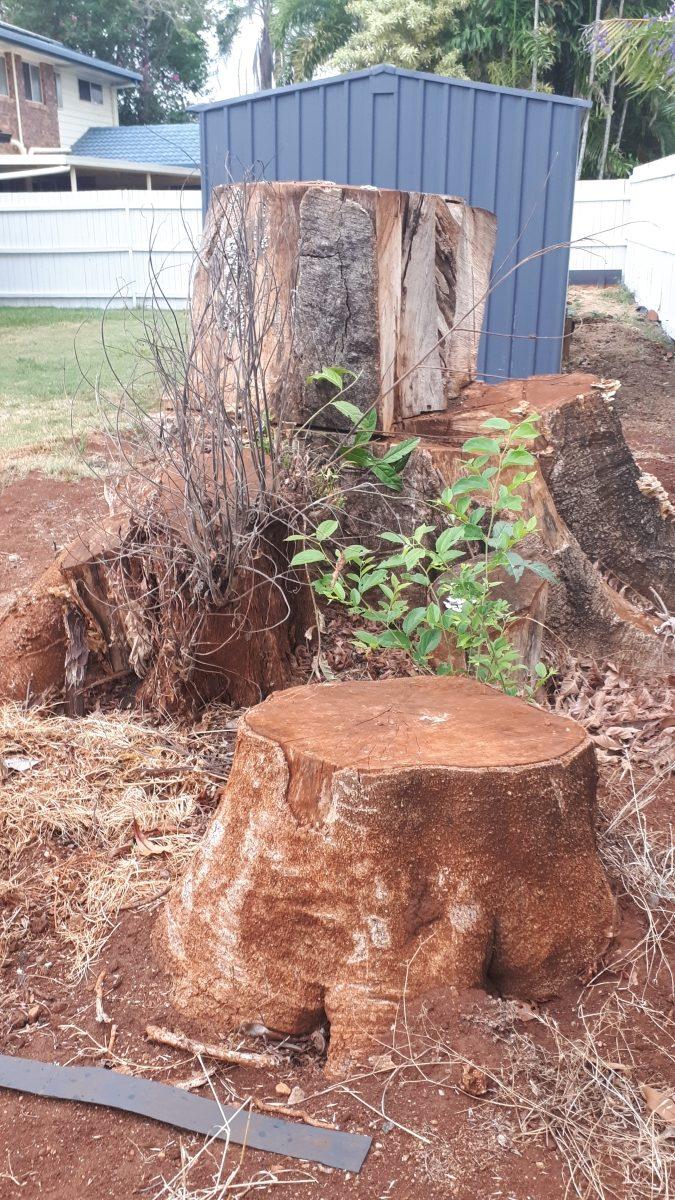 All Access Stump Grinding/Removal Wynnum