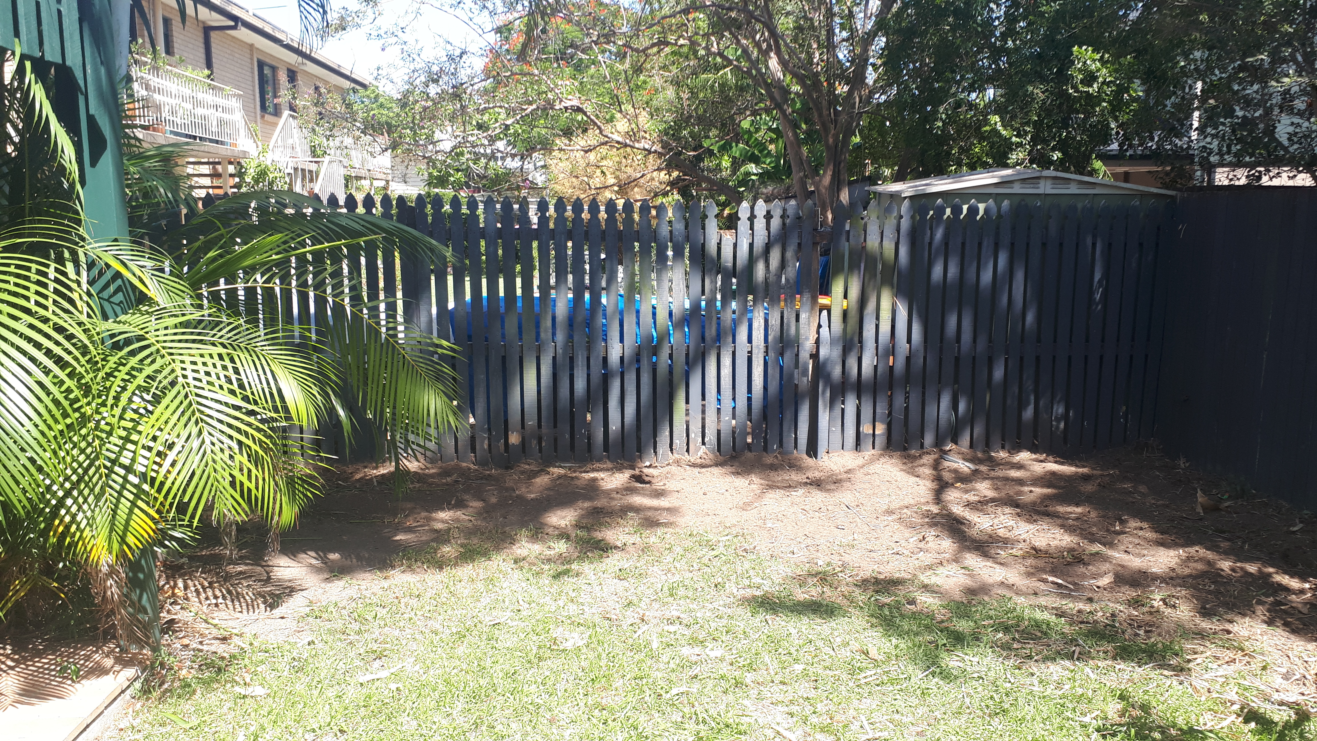 Bamboo Removal Graceville