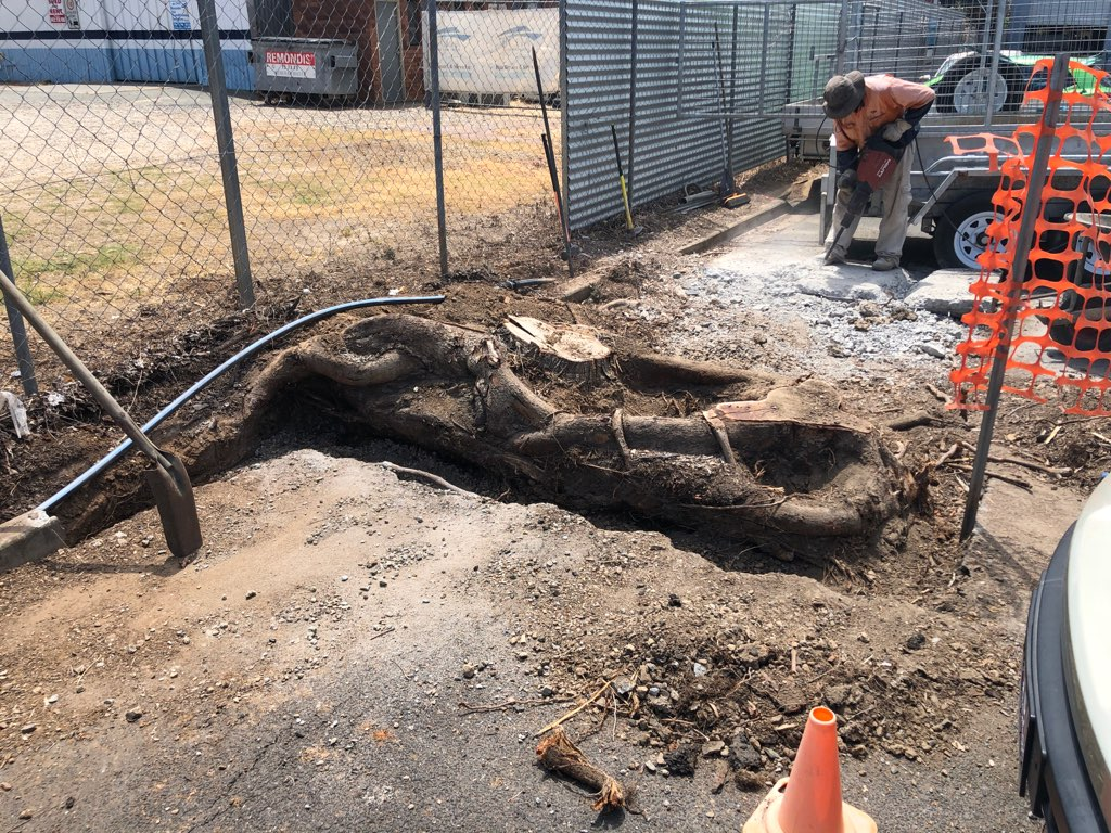 Tree trunk grinding / stump grinding
