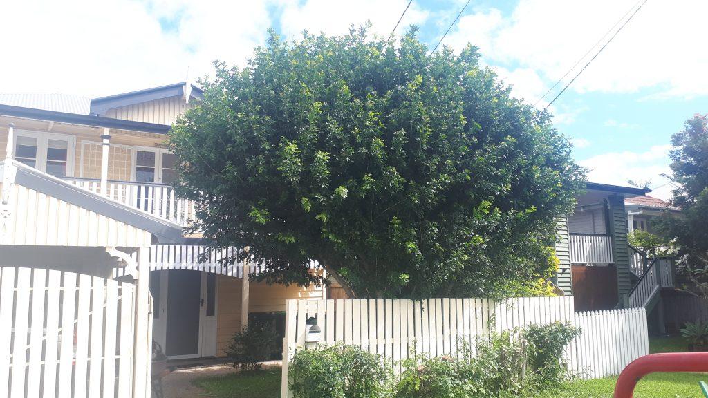Garden Services Brisbane