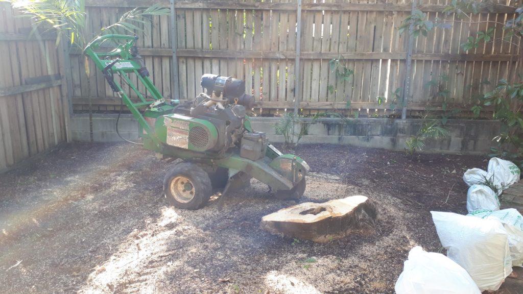 Stump grinding Clayfield