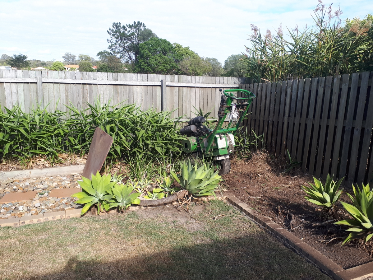 tiger grass removal